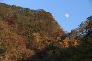 晩秋の紅葉 奥久慈袋田に昇る月の写真素材 [FYI00461513]