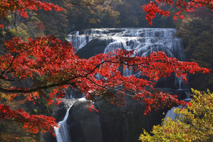 袋田の滝 紅葉 第2観瀑台から望むの写真素材 [FYI00461529]