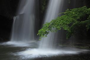 月待の滝 新緑青み渡る 裏見の滝 くぐり滝 二十三夜尊信仰の写真素材 [FYI00461536]
