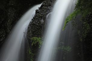月待の滝 新緑青み渡る 裏見の滝 くぐり滝 二十三夜尊信仰の写真素材 [FYI00461558]