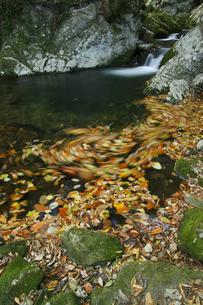花園渓谷 もみじ色の流れ 清流の淵に渦巻く紅葉の華麗な色の写真素材 [FYI00461573]