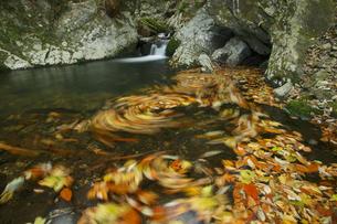 花園渓谷 もみじ色の流れ 清流の淵に渦巻く紅葉の華麗な色の写真素材 [FYI00461575]