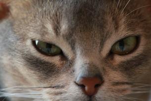 猫 寄り 望遠の素材 [FYI00461678]