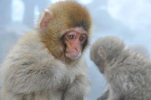 親猿を待つ子猿の写真素材 [FYI00461683]