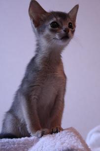 子猫 縦位置の素材 [FYI00461704]