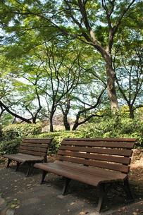 公園のベンチの写真素材 [FYI00461795]