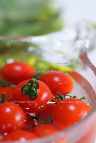 新鮮な赤いプチトマトの素材 [FYI00461906]