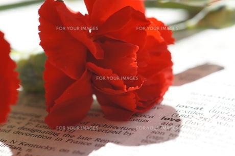 赤いカーネーションとLOVEの写真素材 [FYI00461922]
