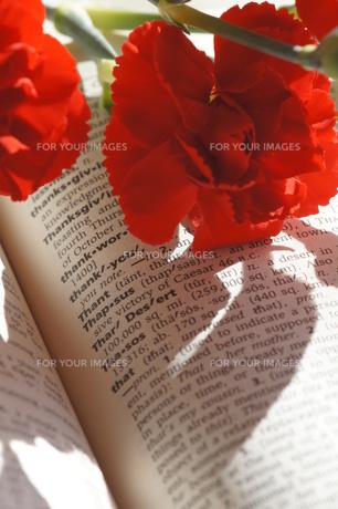 母の日の赤いカーネーションの写真素材 [FYI00461930]