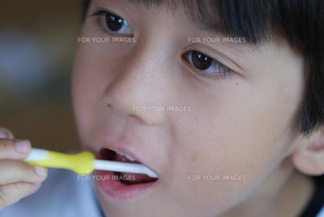 歯磨きをする子供の写真素材 [FYI00461953]