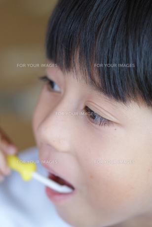歯磨きをする幼児の写真素材 [FYI00461970]