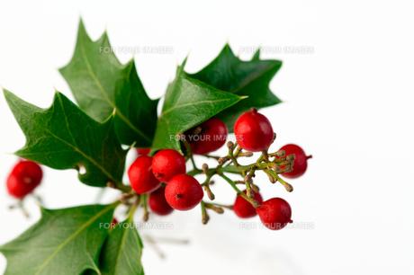 クリスマス_ 柊と赤い実の写真素材 [FYI00462043]