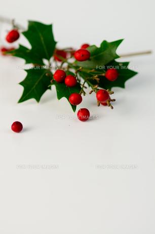 クリスマス_ 柊と赤い実の写真素材 [FYI00462050]