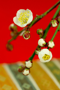 正月素材_ 梅の花の素材 [FYI00462130]