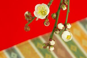 正月素材_ 梅の花の素材 [FYI00462148]