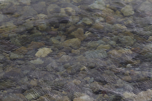 波うち際と水底の石の写真素材 [FYI00462189]