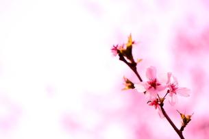 春色の写真素材 [FYI00462290]
