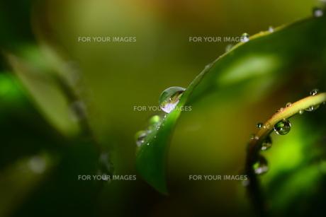 水滴3の写真素材 [FYI00462295]