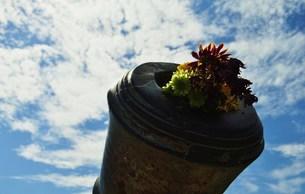 大砲の中の花束の写真素材 [FYI00462418]