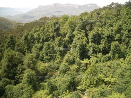 生い茂る木々の素材 [FYI00462466]