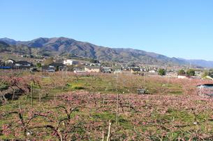 桃畑と春の山の素材 [FYI00462483]
