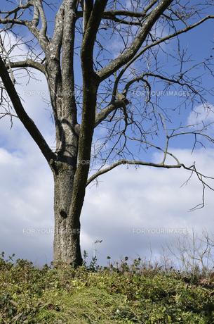柿木と扇風機の写真素材 [FYI00462765]