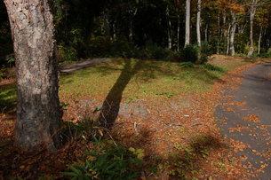 林間に秋の気配の写真素材 [FYI00463969]