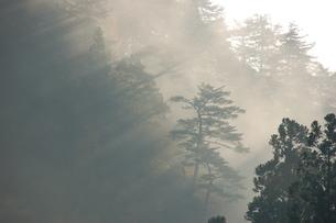 初冬の幻想的な朝霧の写真素材 [FYI00464012]