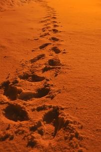 雪上の轍の素材 [FYI00464073]