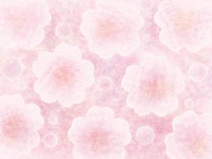 和紙な質感の桜パターンの素材 [FYI00464076]