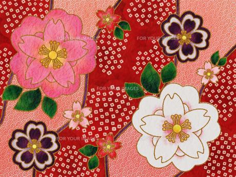 桜の着物柄‐赤の素材 [FYI00464084]