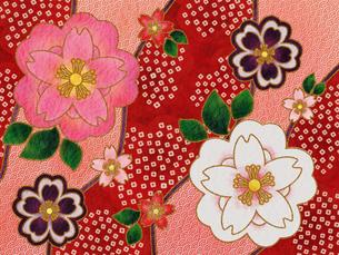 桜の着物柄‐赤の写真素材 [FYI00464084]