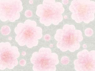 和紙な質感の桜パターンの写真素材 [FYI00464091]