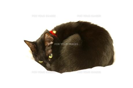 黒猫の写真素材 [FYI00464194]