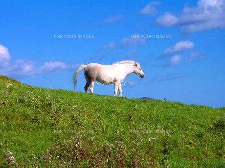 白馬の写真素材 [FYI00464225]
