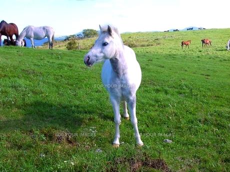子馬の写真素材 [FYI00464229]