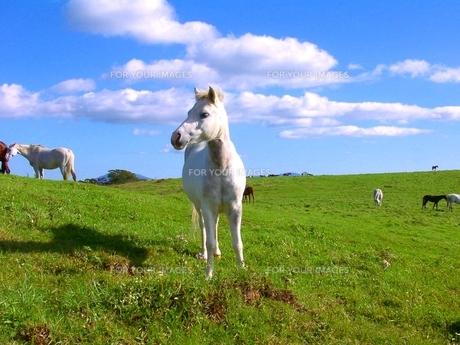 白馬の写真素材 [FYI00464238]