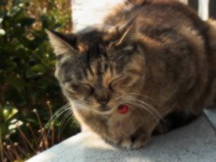 幸せを運ぶ猫の写真素材 [FYI00464250]