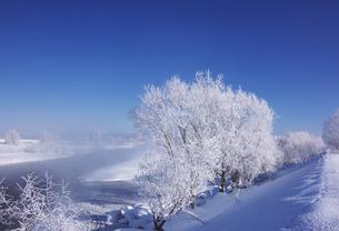 樹氷とけあらしの素材 [FYI00464310]