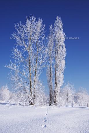樹氷の素材 [FYI00464312]
