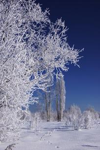 樹氷と青空の素材 [FYI00464314]