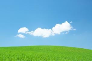 丘の上の青い空と白い雲の素材 [FYI00464349]