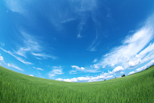 麦畑と青空の素材 [FYI00464354]
