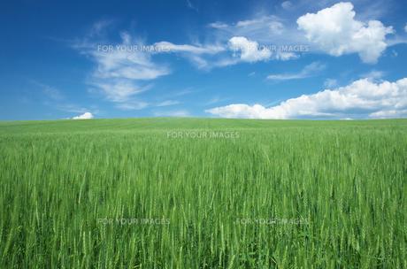 右畑と青空の素材 [FYI00464363]