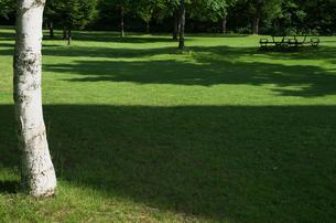 白樺と芝生の素材 [FYI00464367]