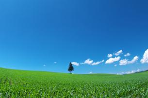 一本の木と青空の素材 [FYI00464371]