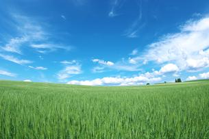 麦畑と青空の素材 [FYI00464381]