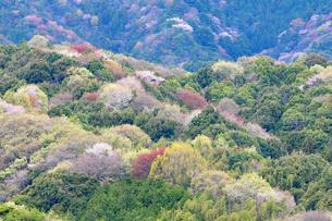 新緑の山並みの写真素材 [FYI00464409]