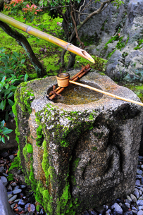 手水鉢の写真素材 [FYI00464413]