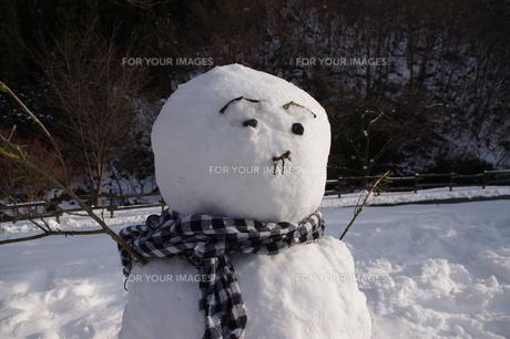 雪だるまの写真素材 [FYI00464458]